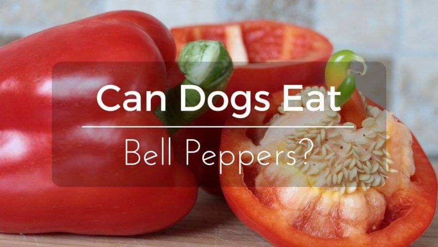 Can Dogs Eat Capsicum Peppers